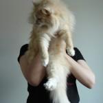 paita_kissa